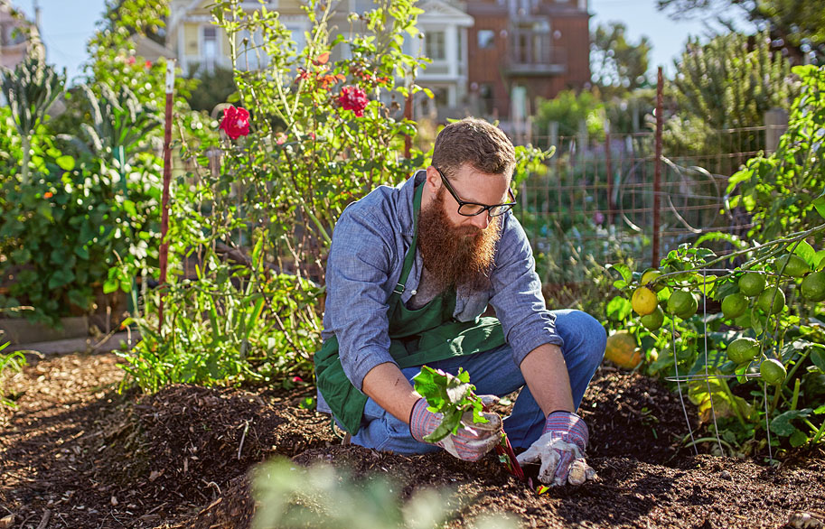 Vedic Gardening